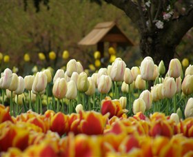Tulip Top Gardens - Geraldton Accommodation
