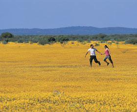 Wildflowers of the Mid West - Geraldton Accommodation