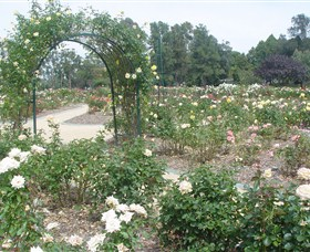 Victoria Park Rose Garden - Geraldton Accommodation