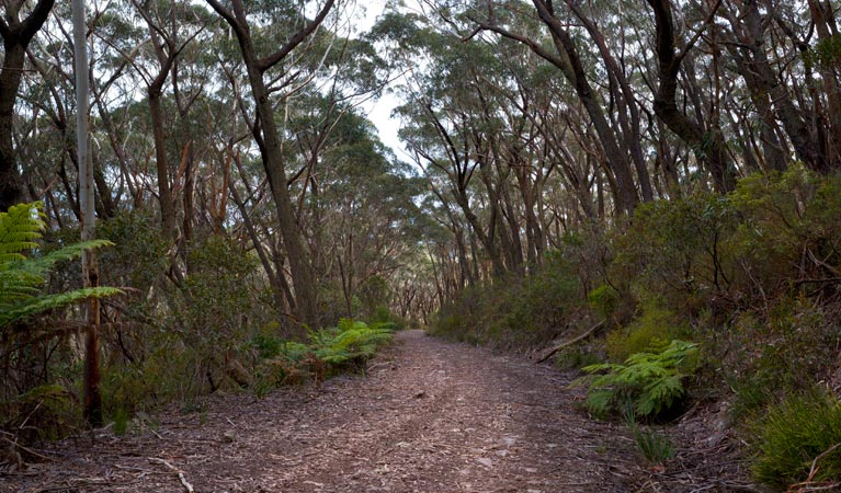 Budawang National Park - Geraldton Accommodation