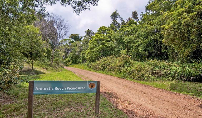 Antarctic Beech picnic area - Geraldton Accommodation