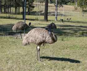 Glen Ian Ostrich and Emu Farm