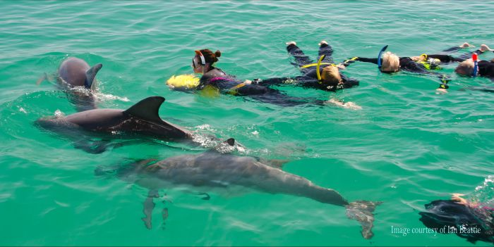 Rockingham Wild Encounters - Swim with Wild Dolphins - Geraldton Accommodation