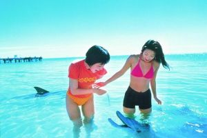 Monkey Mia Dolphins  Shark Bay Air Tour From Perth - Geraldton Accommodation
