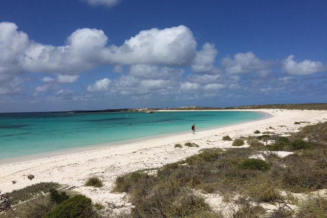 Abrolhos Island Half Day Fly and Flipper - Geraldton Accommodation