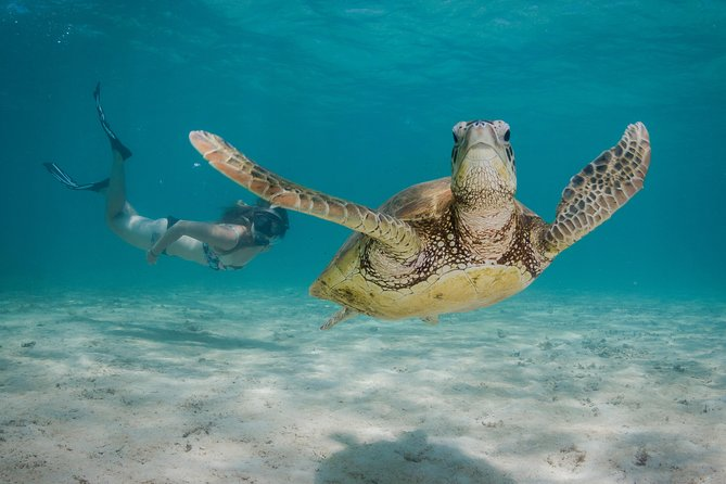 Marine Life Discovery  Lagoon Snorkeling Tour from Exmouth