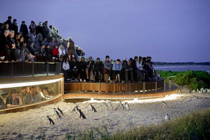 1 Day Private Phillip Island Tour VIP Charter up to 9 People - Geraldton Accommodation