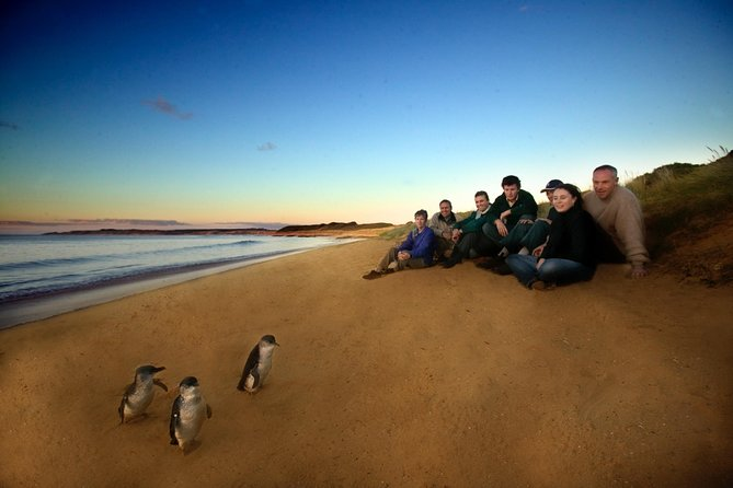 Phillip Island Ultimate Penguin Eco Tour or Skybox Experience - Geraldton Accommodation