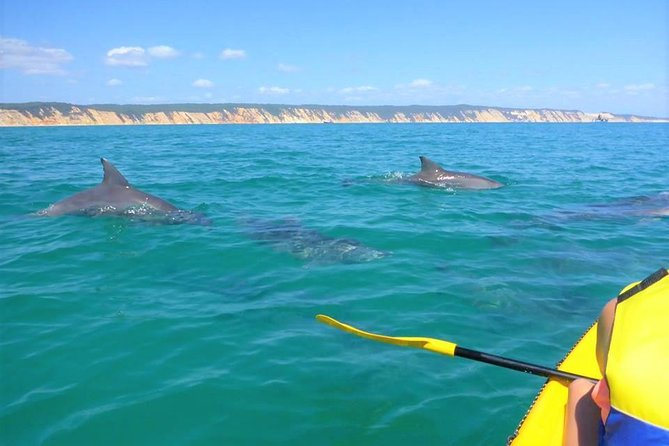 Half-Day Kayak with Dolphins and WD Beach Drive from Rainbow Beach