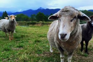 Trevena Glen Farm Animal Experience - Geraldton Accommodation