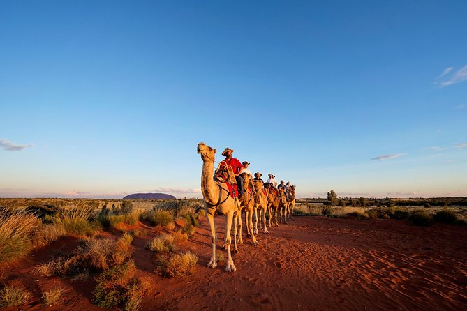 Uluru Camel Express Sunrise or Sunset Tours - Geraldton Accommodation