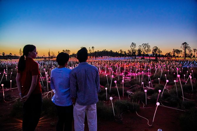 Uluru Field of Light Sunrise Tour - Geraldton Accommodation