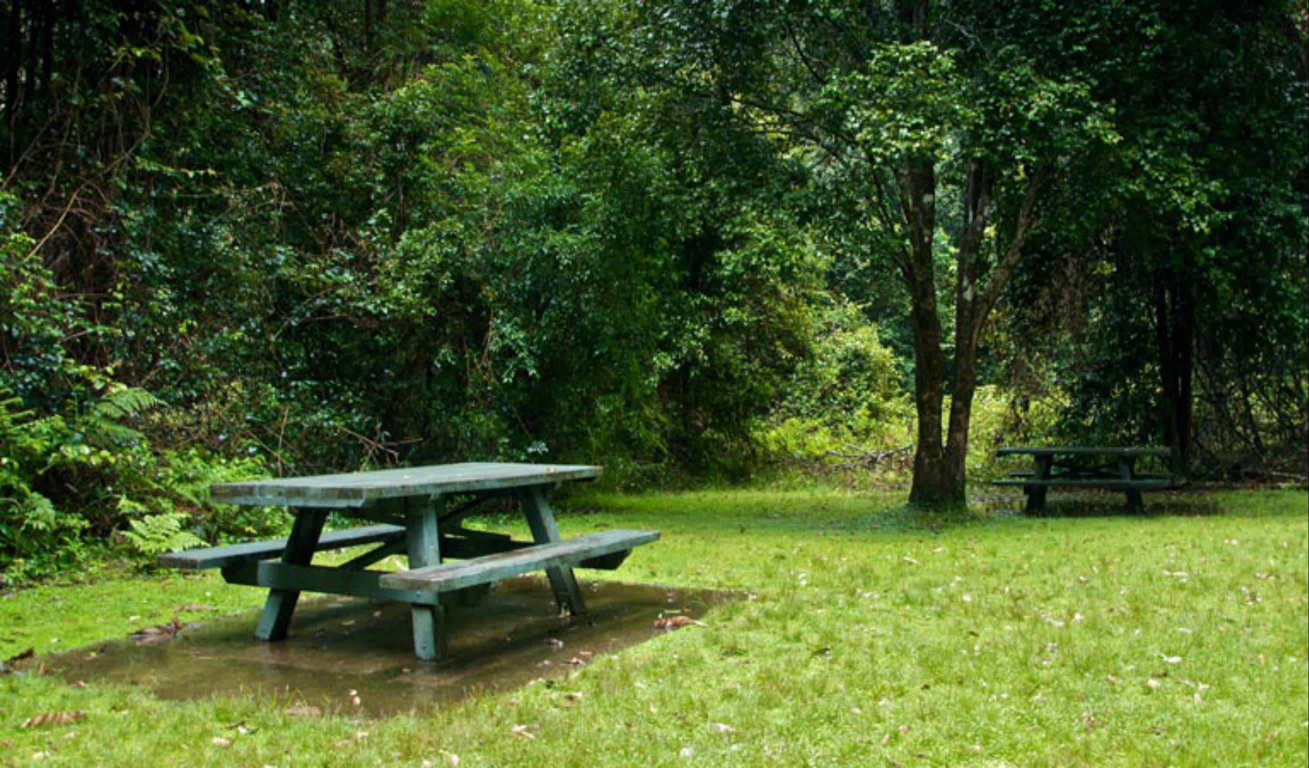 Williams River picnic area - Geraldton Accommodation