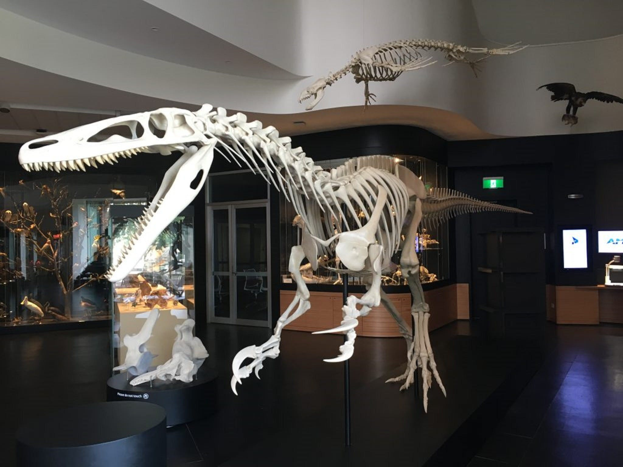 UNE Natural History Museum - Geraldton Accommodation