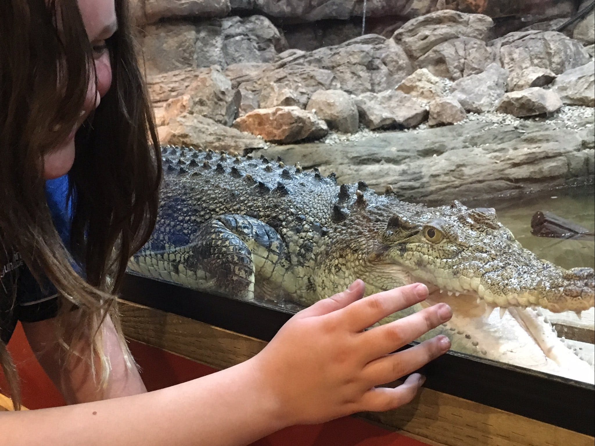 Canberra Reptile Zoo - Geraldton Accommodation