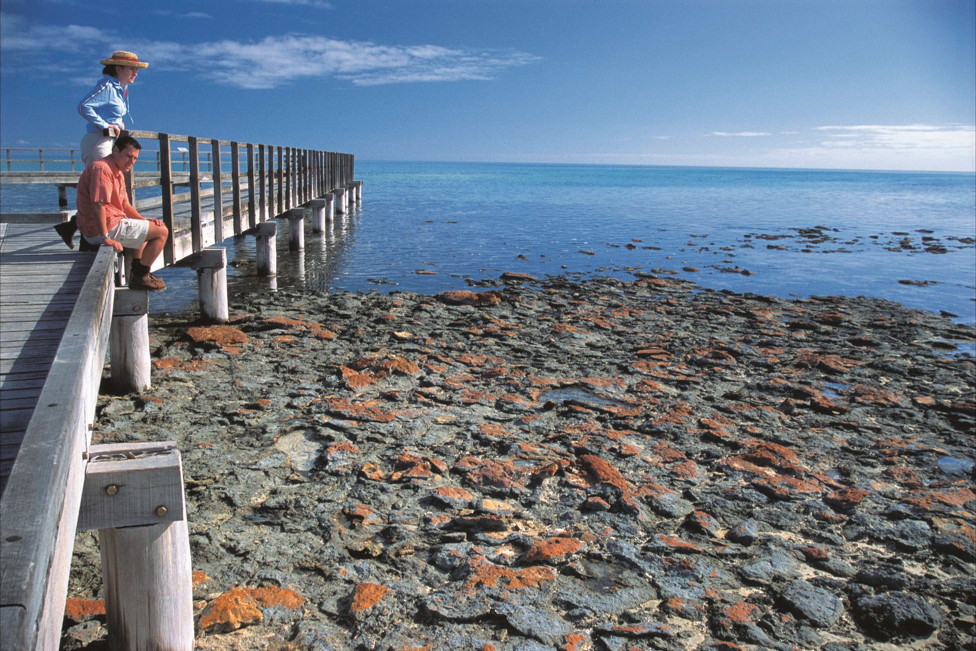 Hamelin Pool Stromatolites - Geraldton Accommodation