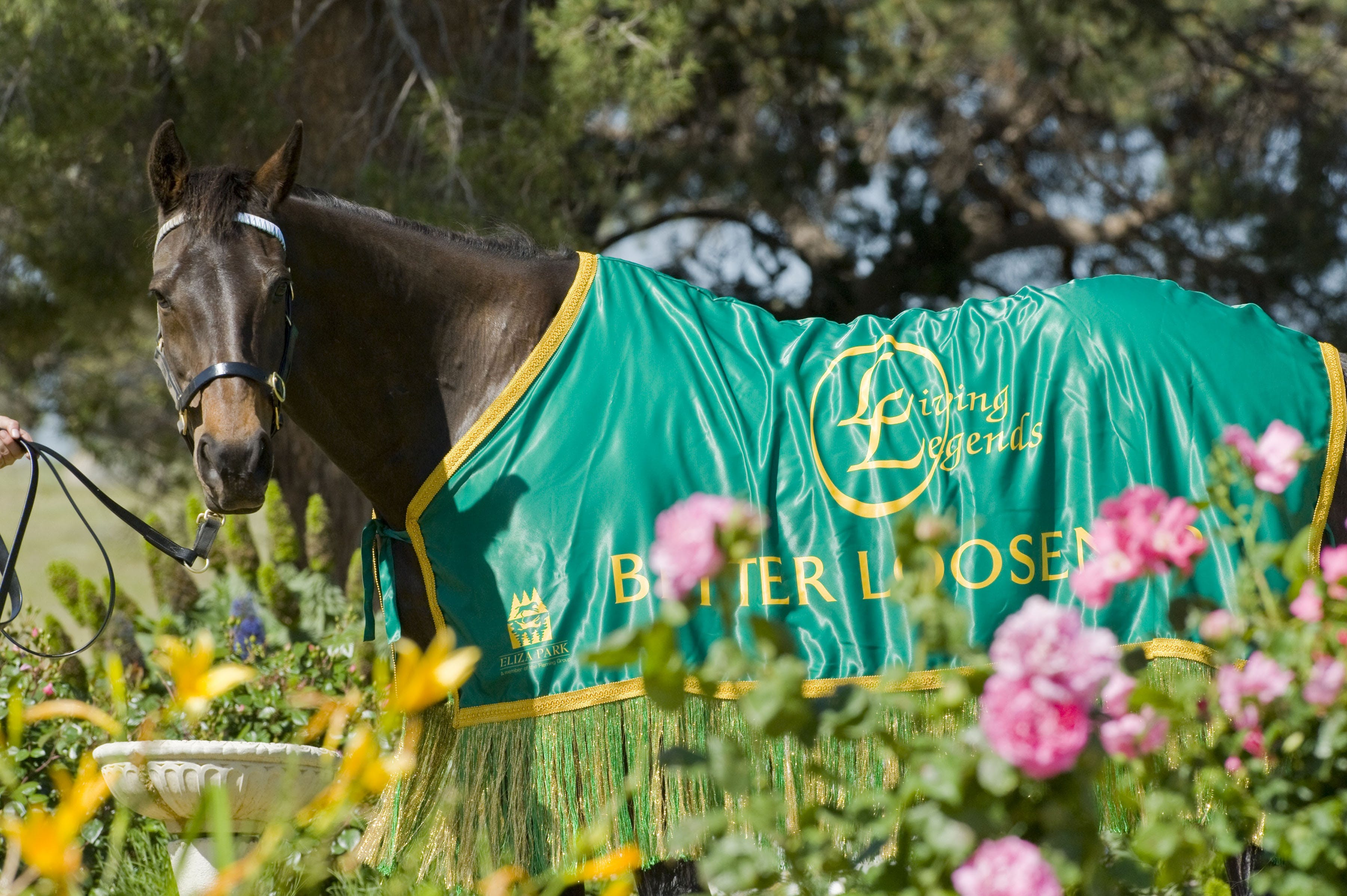 Living Legends The International Home of Rest for Champion Horses - Geraldton Accommodation