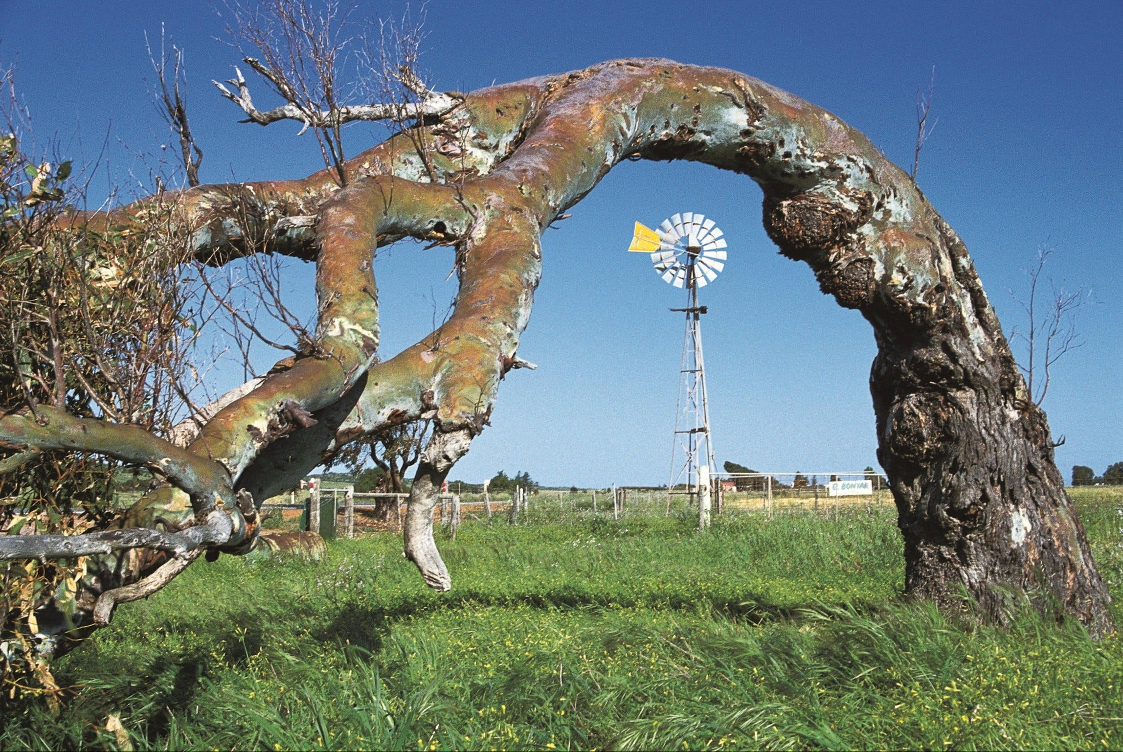Greenough Leaning Trees - Geraldton Accommodation