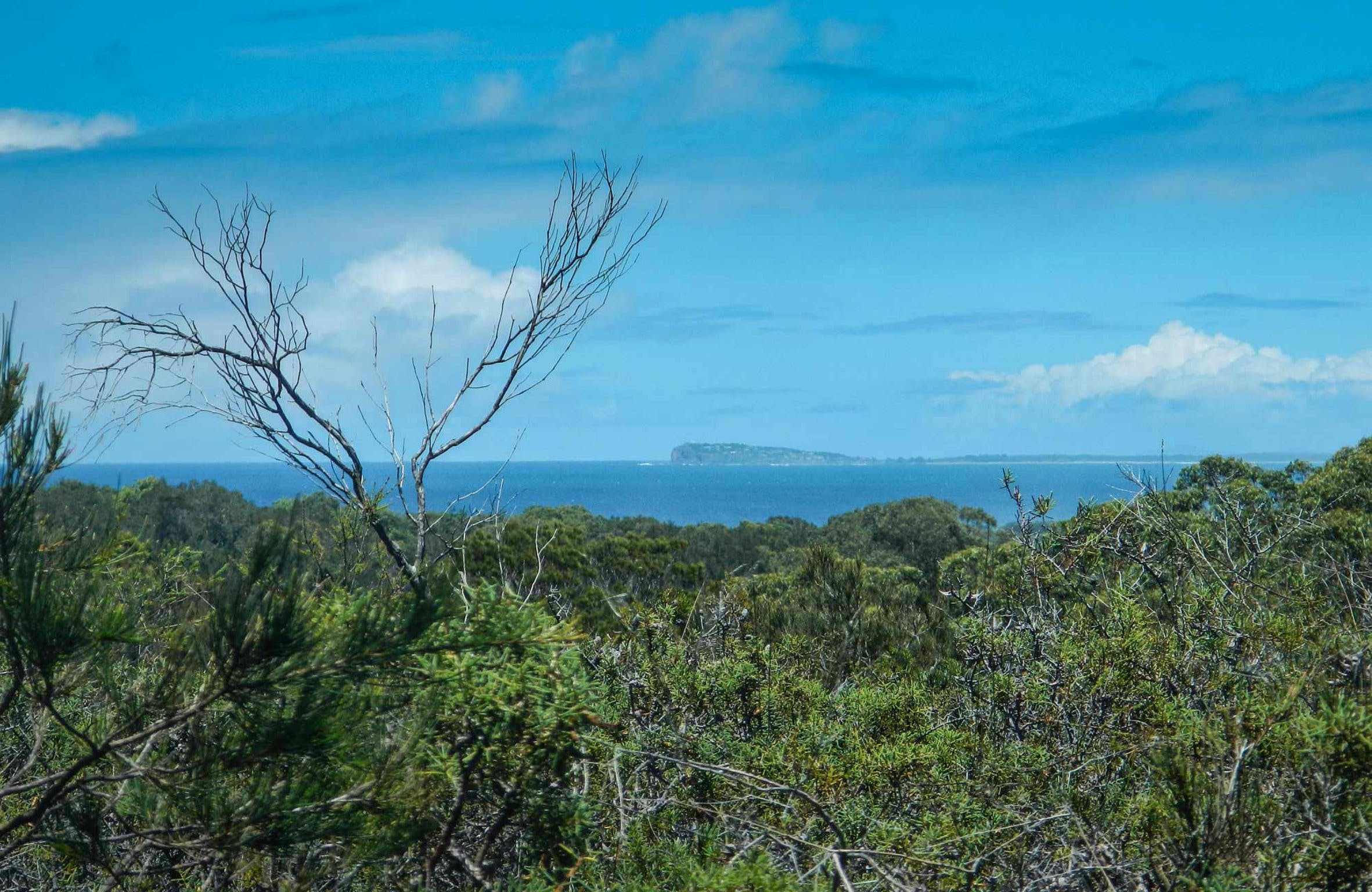 Forest Walking Track Crowdy Bay National Park - Geraldton Accommodation