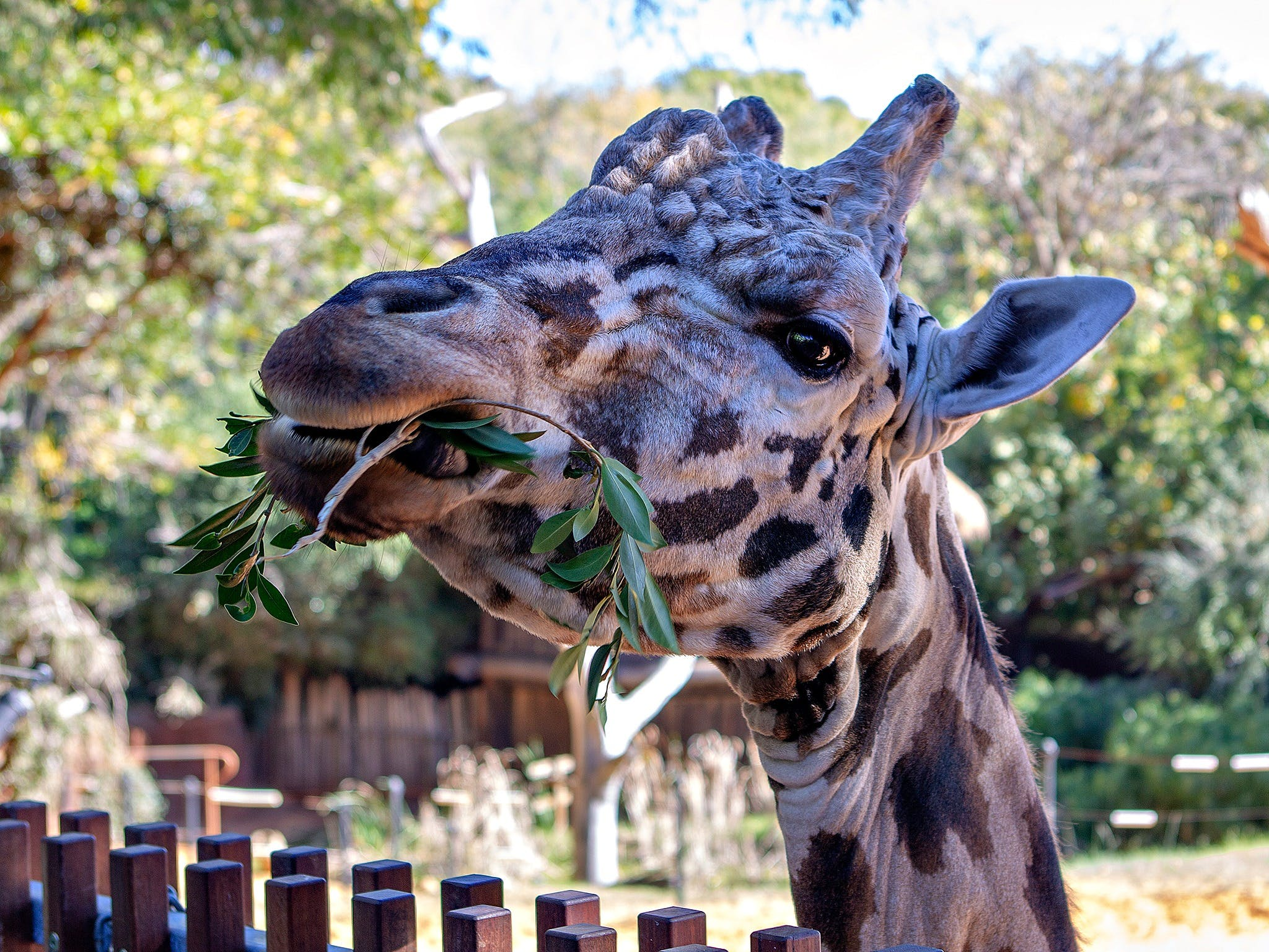 Perth Zoo - Geraldton Accommodation