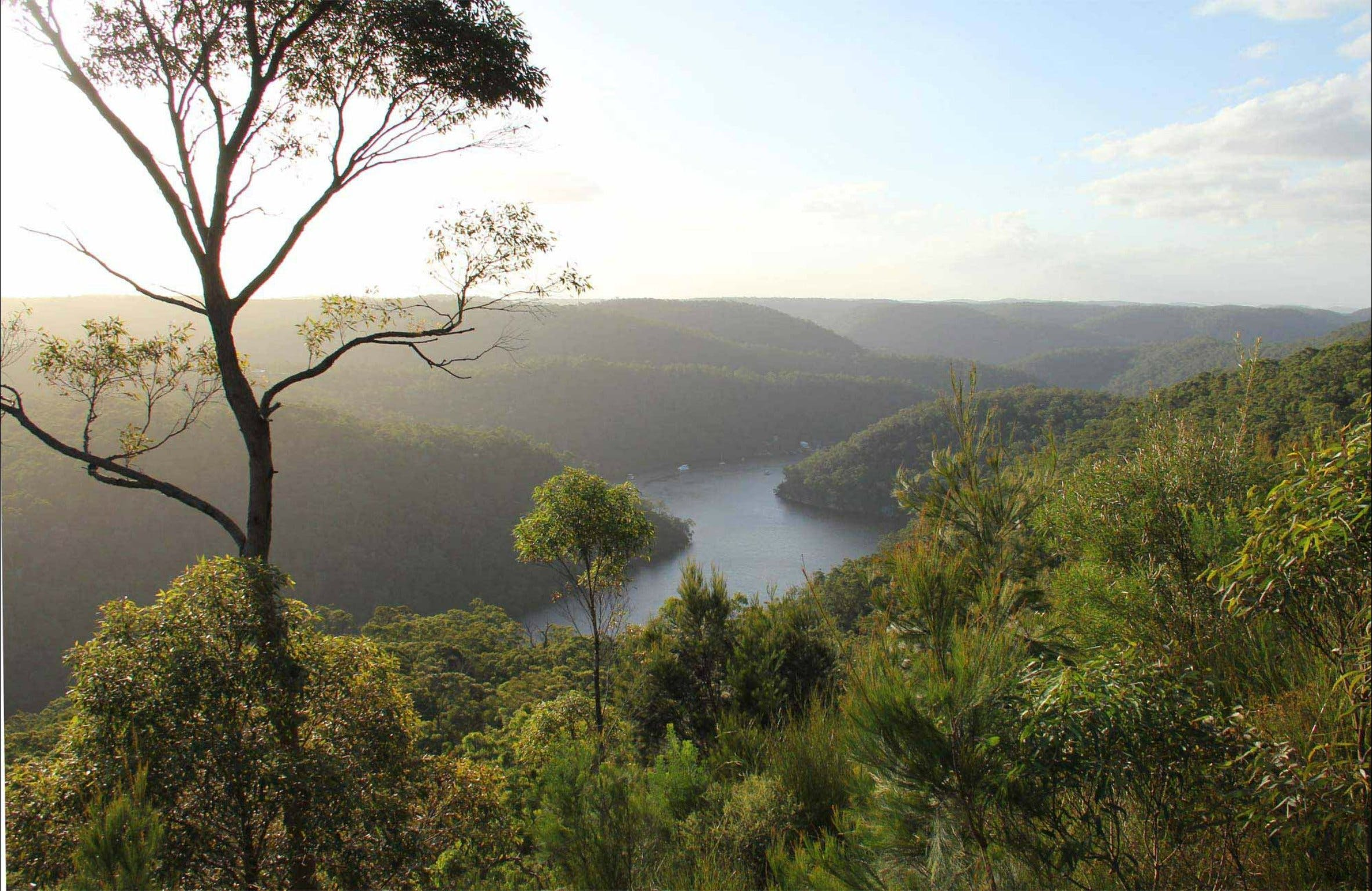 Great North walk - Berowra Valley National Park - Geraldton Accommodation