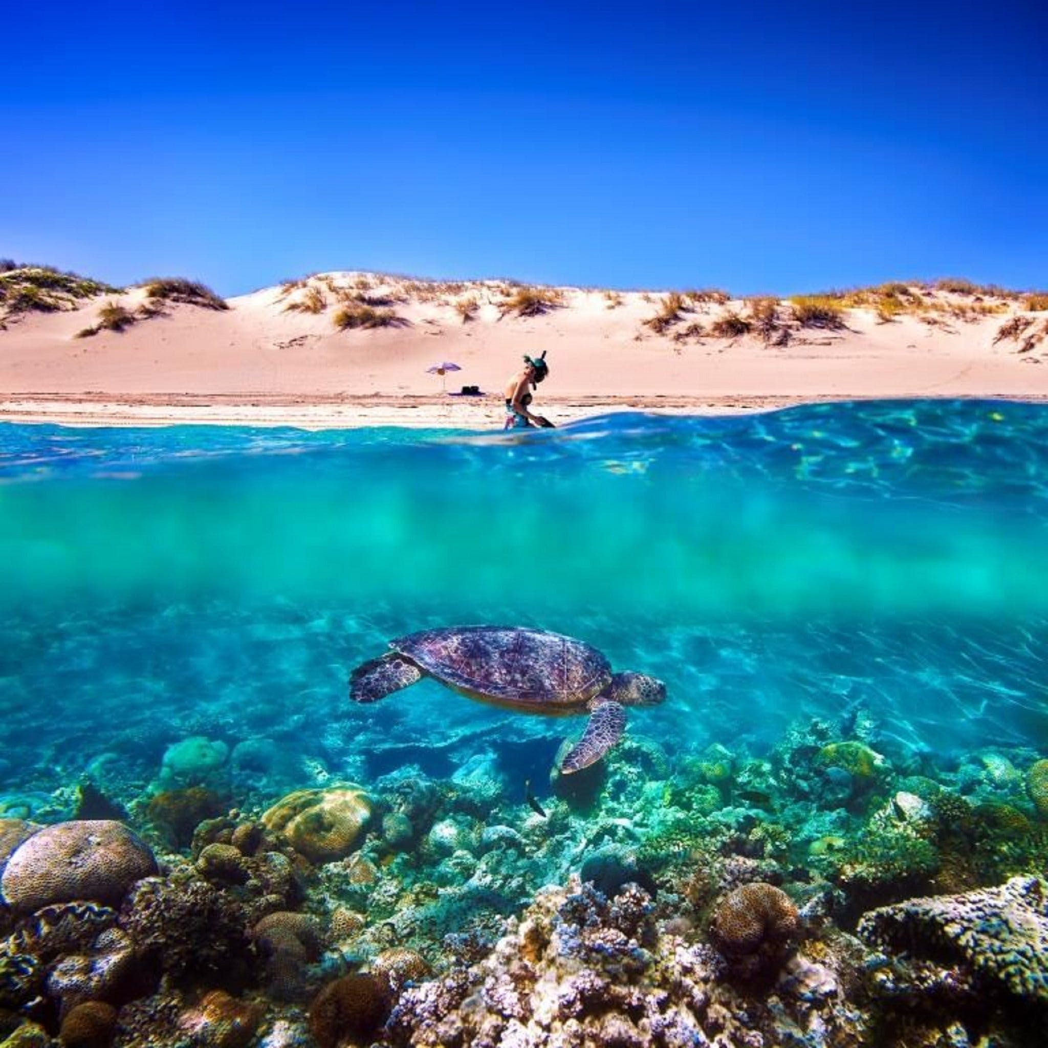Snorkel the Ningaloo Reef - Geraldton Accommodation
