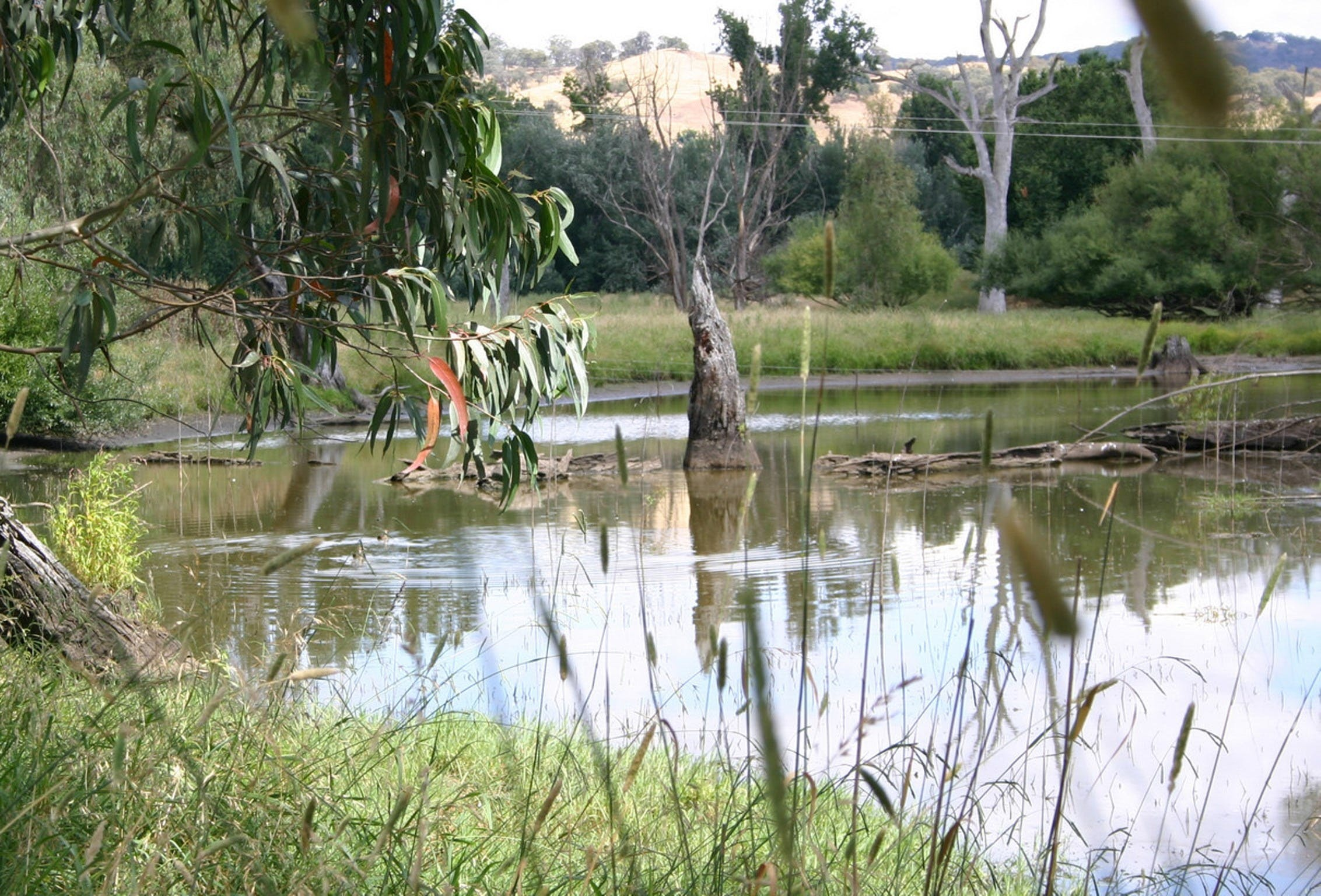 Tumut Wetlands - Geraldton Accommodation