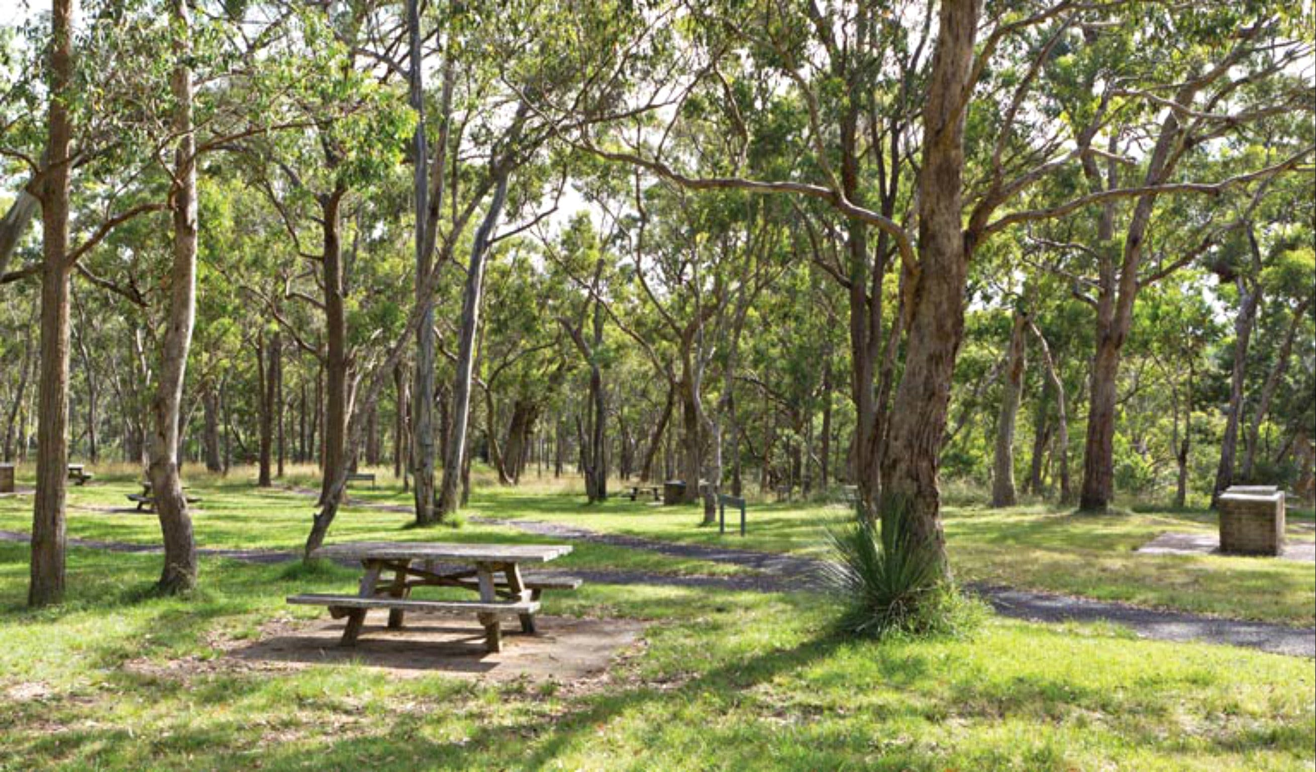 Wollomombi Gorge and Falls Picnic Area - Geraldton Accommodation