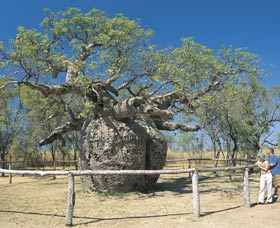 Boab Prison Tree - Geraldton Accommodation